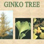 2009_0130_ginko