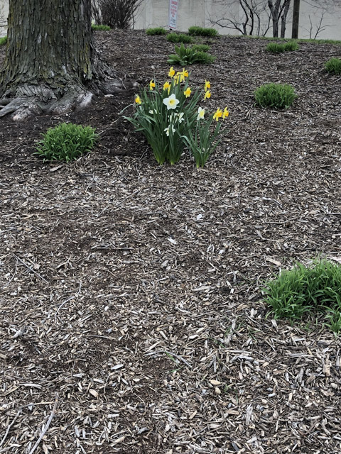 FLOWERS-041820